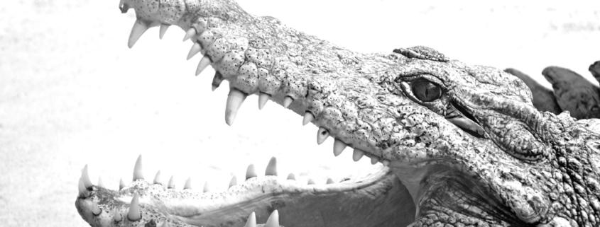 So lange uns keine Zähne nachwachsen, hilft nur Prophylaxe und regelmäßige Kontrolle
